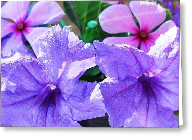 Popping Purple Petals Beauty Greeting Card