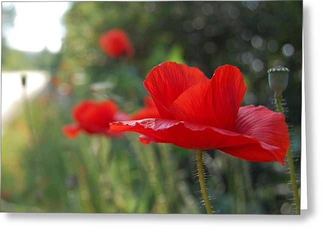 Poppy 2 Greeting Card