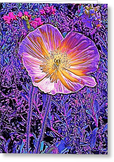 Poppy 3 Greeting Card by Pamela Cooper