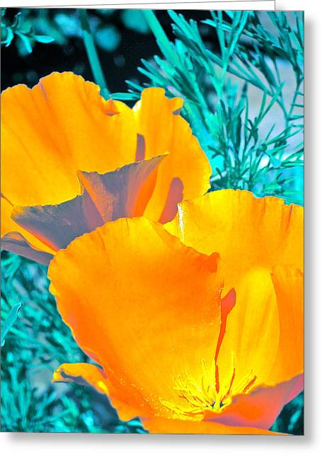 Poppy 4 Greeting Card by Pamela Cooper
