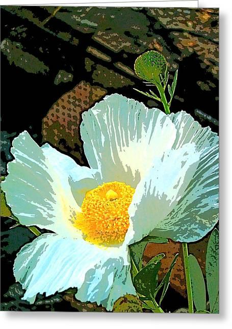 Poppy 5 Greeting Card by Pamela Cooper