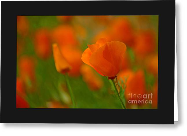 Greeting Card featuring the photograph Poppy Art by Nick  Boren