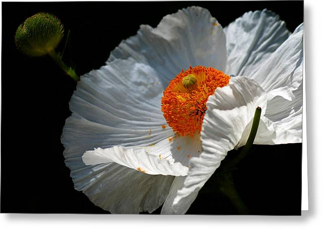 Poppy Greeting Card by Camille Lopez