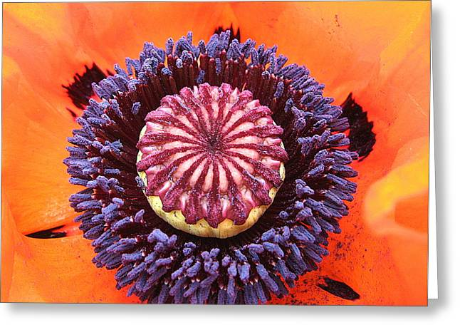Poppy Delight Greeting Card by Brian Chase