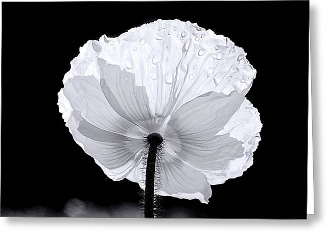 Poppy Greeting Card by Elizabeth Budd
