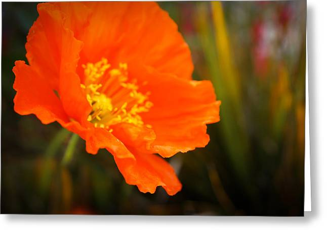 Poppy Emerges Like The Sun Greeting Card by Ronda Broatch