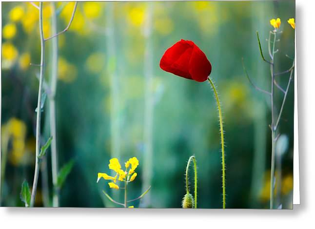Poppy Greeting Card by Evgeni Dinev