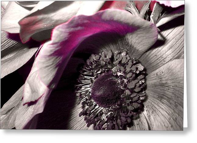 Poppy Eye Greeting Card by Sharon Costa