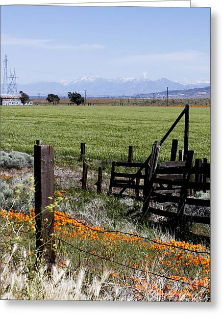 Greeting Card featuring the photograph Poppy Fences by Ivete Basso Photography