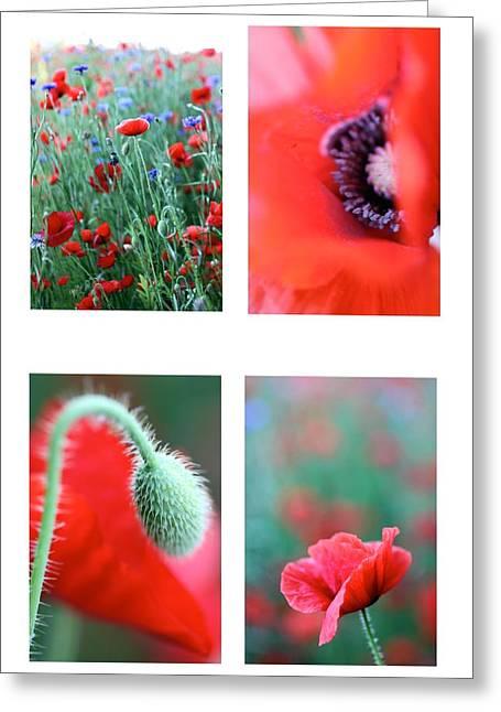 Poppy Field 1 Greeting Card by AR Annahita