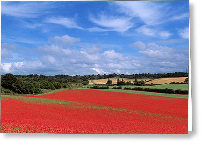 Poppy Field In Bloom, Worcestershire Greeting Card by Panoramic Images