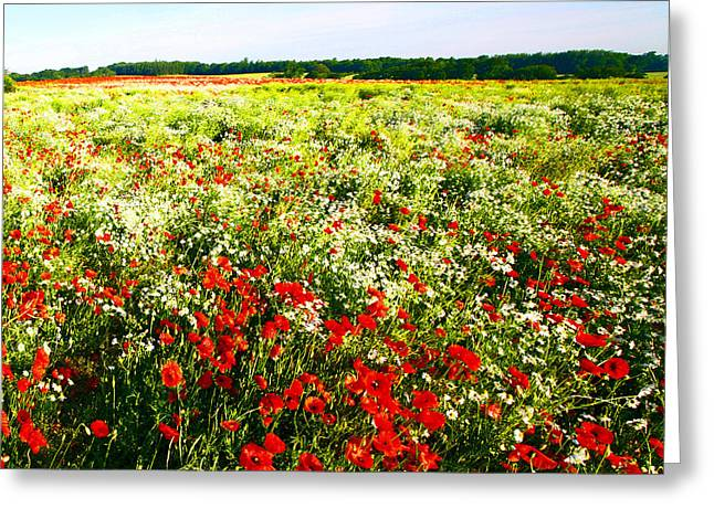 Poppy Field In Summer Greeting Card by Craig B