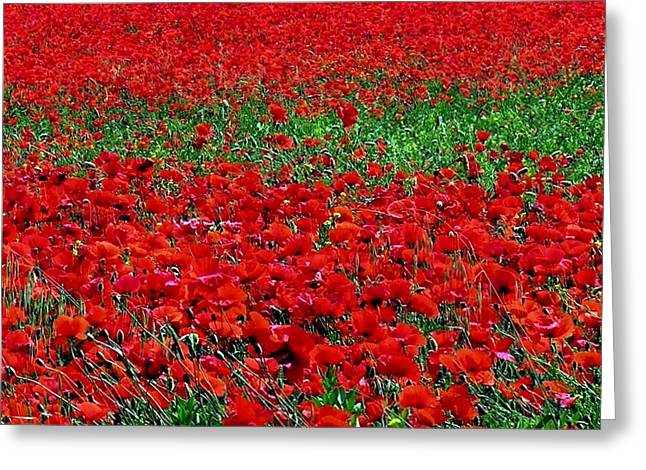 Poppy Field Greeting Card by Jacqueline M Lewis