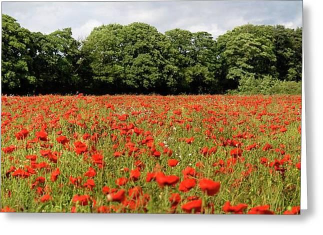 Poppy Field Greeting Card by John Short