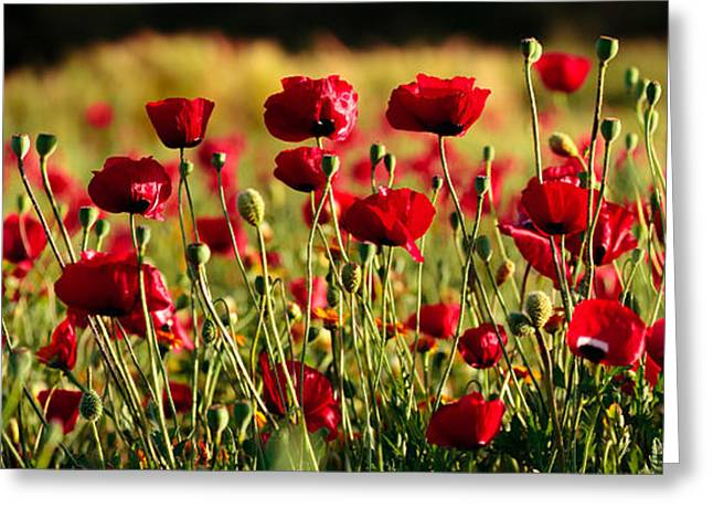 Greeting Card featuring the photograph Poppy Fields Forever by Uri Baruch