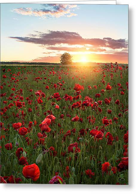 Poppy Fields Of Sweden Greeting Card by Christian Lindsten