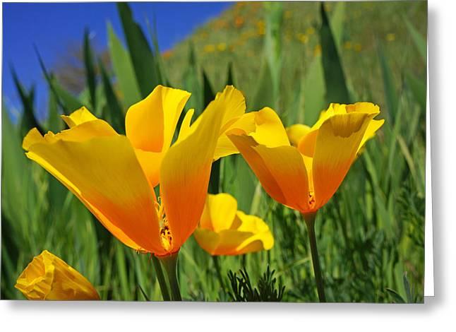 Poppy Flowers Art Prints Orange Poppies Yellow Greeting Card by Baslee Troutman