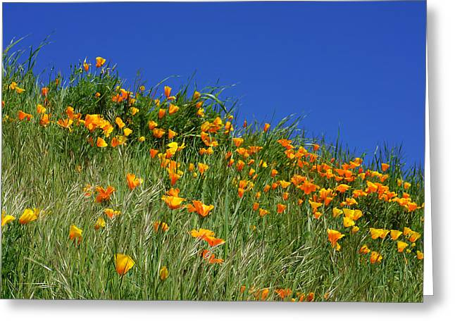 Poppy Flowers Landscape Art Prints Poppies Greeting Card by Baslee Troutman
