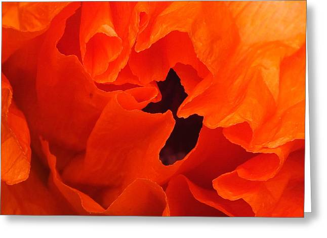 Greeting Card featuring the photograph Poppy by Gene Cyr