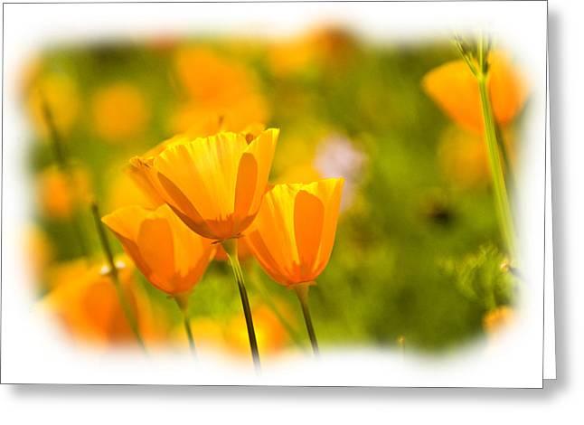 Poppy Gold Greeting Card by Larry Goss