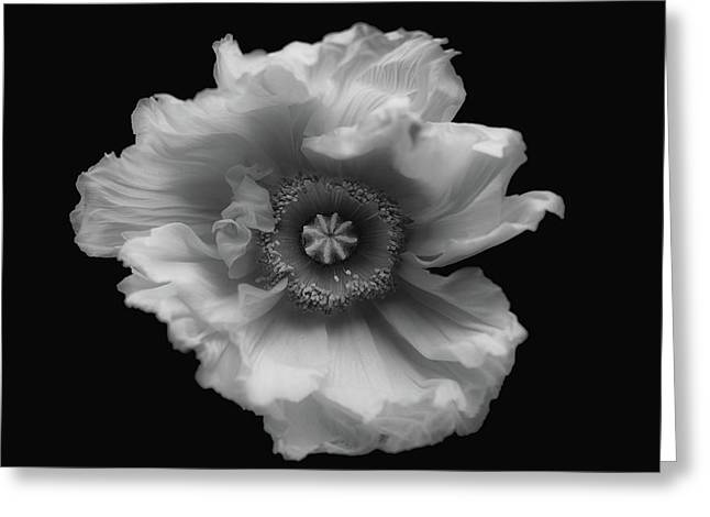 Poppy In Mono Greeting Card by Lotte Gr??nkj??r