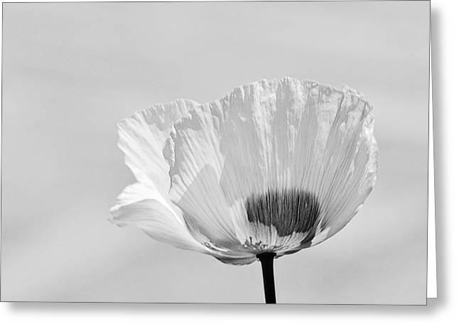 Poppy In White Greeting Card