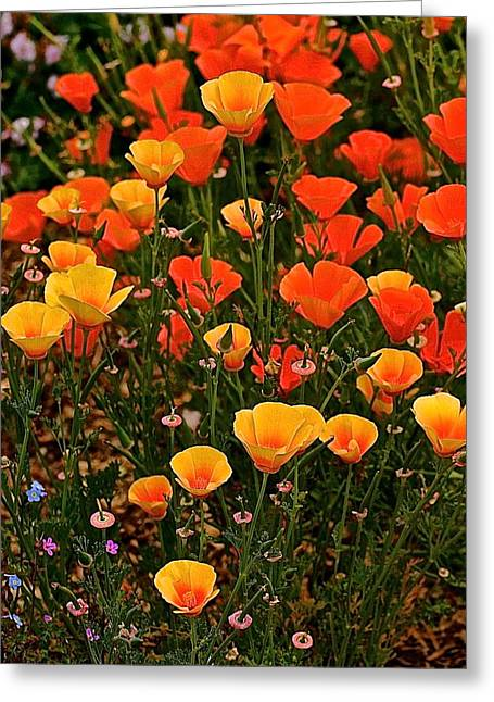 Poppy-luscious Greeting Card