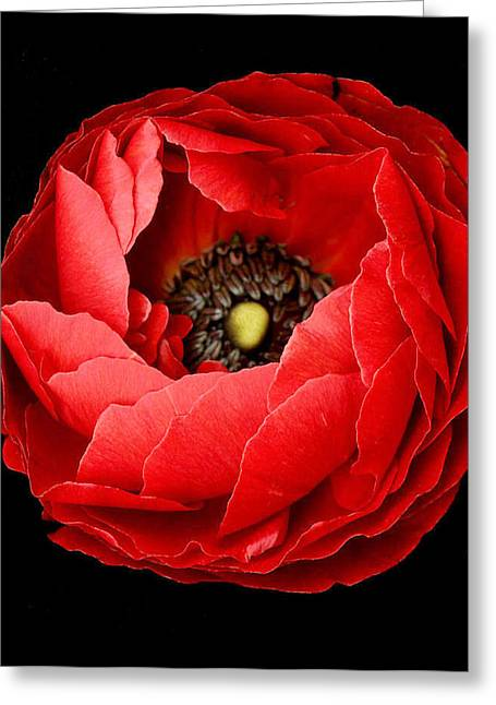 Poppy On Black Background Greeting Card