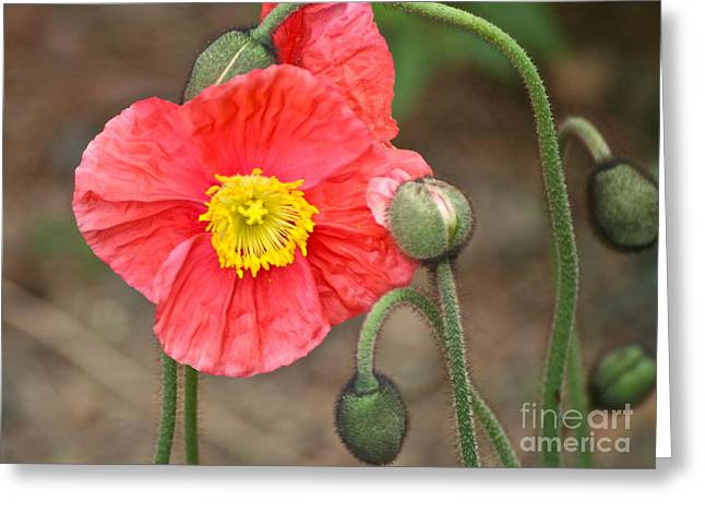 Poppy Power Greeting Card