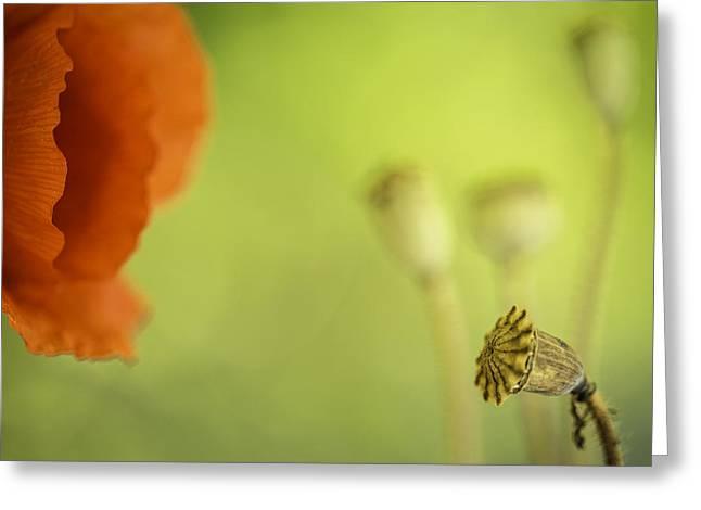 Poppy Red Summer Flower Macro Greeting Card
