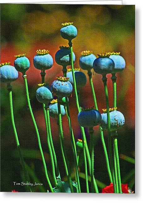 Poppy Seed Pods Greeting Card by Tom Janca