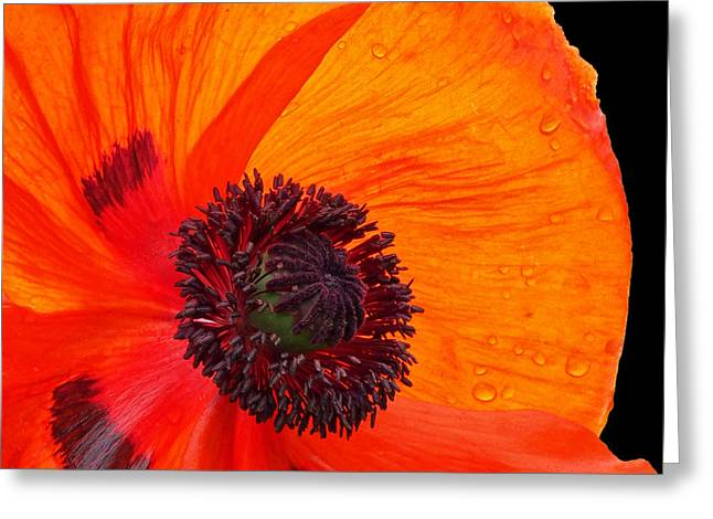 Poppy With Raindrops 2 Greeting Card by Gill Billington