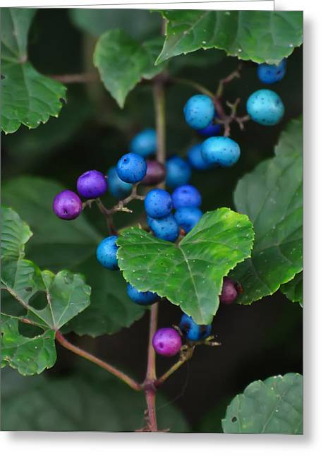 Porcelain Berries On A Vine Greeting Card by Chris Flees