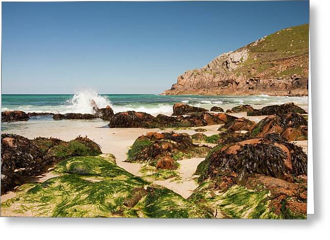 Portheras Cove Near St Just Greeting Card by Ashley Cooper