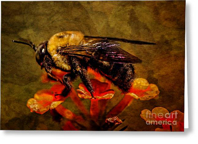 Portrait Of A Bee Greeting Card