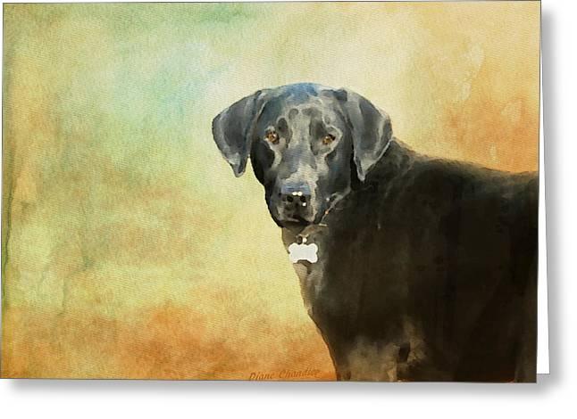Portrait Of A Black Labrador Retriever Greeting Card