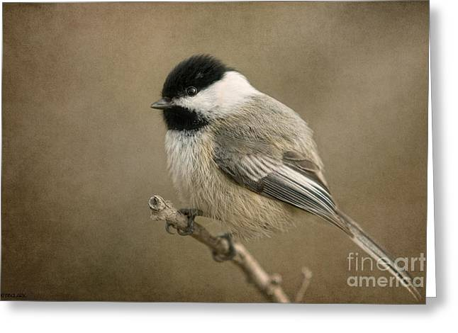 Portrait Of A Blackcapped Chickadee Greeting Card