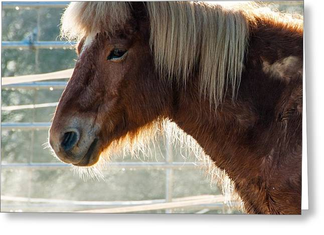 Portrait Of A Brown Horse Greeting Card