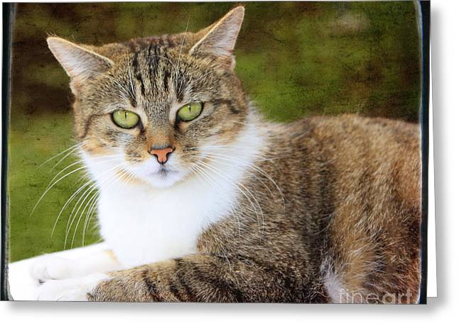 Portrait Of A Cat Greeting Card by Angela Bruno