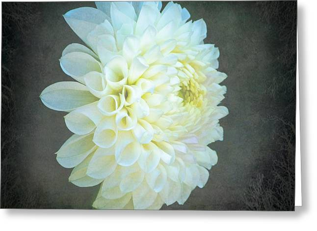 Portrait Of A Dahlia Greeting Card