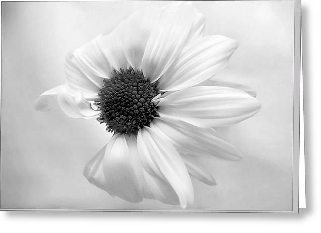 Portrait Of A Daisy Greeting Card by Louise Kumpf