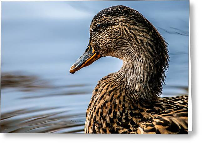 Portrait Of A Duck Greeting Card by Bob Orsillo