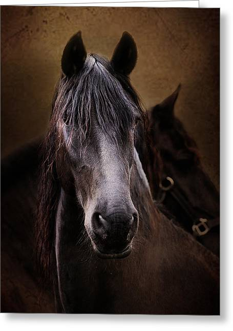 Portrait Of A Friesian Greeting Card by Pamela Hagedoorn