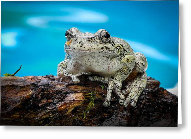 Portrait Of A Frog Greeting Card