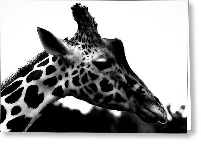 Portrait Of A Giraffe Greeting Card by Martin Newman