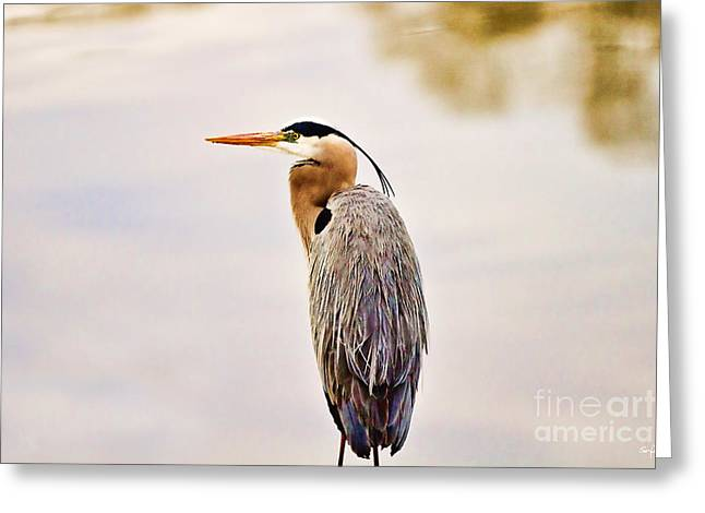 Portrait Of A Great Blue Heron Greeting Card by Scott Pellegrin