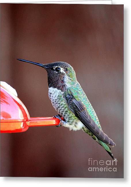 Portrait Of A Hummingbird Greeting Card
