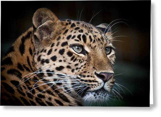 Portrait Of A Leopard Greeting Card