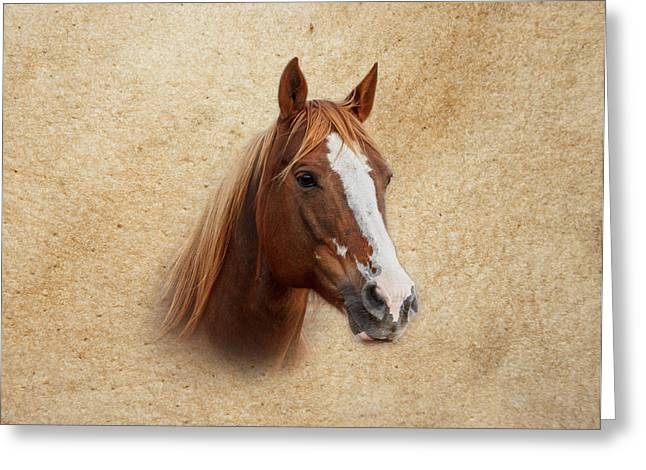 Portrait Of A Mare Print Greeting Card
