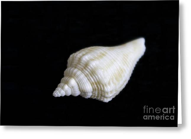 Portrait Of A Sea Shell Greeting Card by Arlene Carmel
